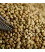 CORIANDOLO – Pianta aromatica dalle spiccate proprietà digestive, sgonfia pancia e disintossicanti - 100 gr